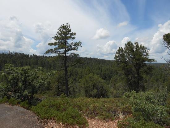 Rainbow Lake Resort: Mogollon Trail, down the street from the Lake
