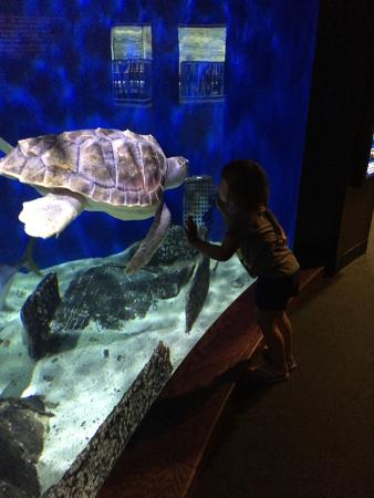 Newport News, VA: Awesome aquarium
