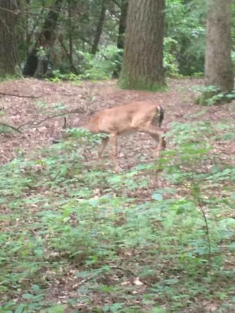 Vogel State Park Campground: Loved our trip