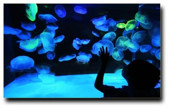 Milwaukie, OR: Explore a whole new world at the Portland Aquarium