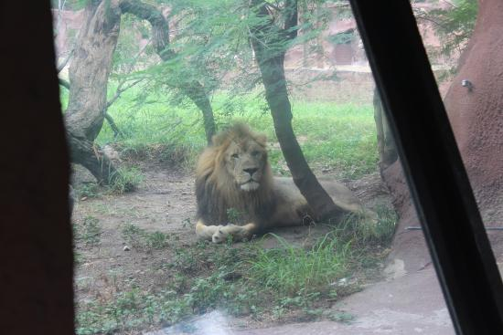 photo0.jpg - na slici je Gladys Porter Zoo, Brownsville - TripAdvisor
