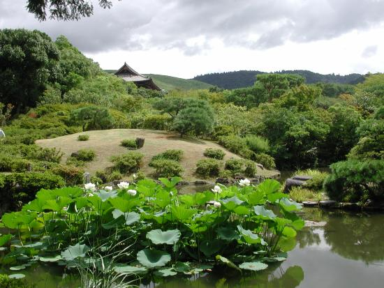 Isuien Garden: Lotus flowers in the pond of the Back Garden