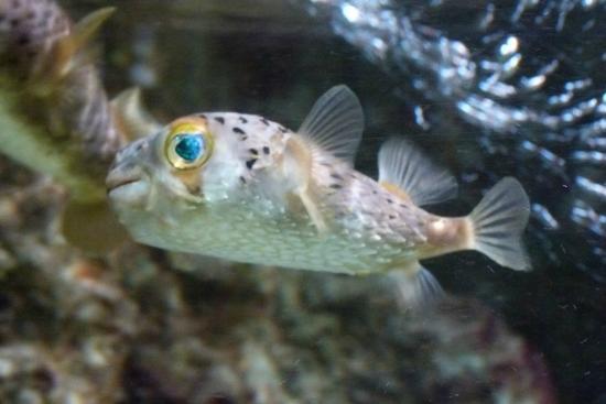 ... lion - Picture of Aquarium de la Guadeloupe, Le Gosier - TripAdvisor