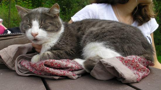 Voie verte de la Suisse Normande: le chat CACAHUETE