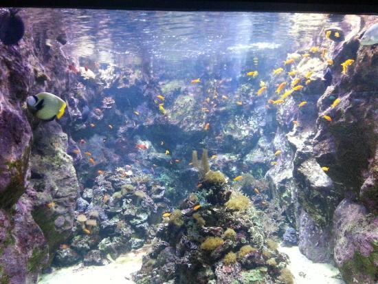 Tres beaux poissons visibles - Picture of Seaquarium, Le Grau-du-Roi