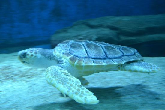 vue aquarium picture of seaquarium le grau du roi tripadvisor