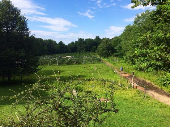 Bird Haven Blueberry Farm