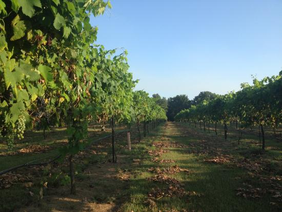 Pittsburg, TX: Sonoma County East