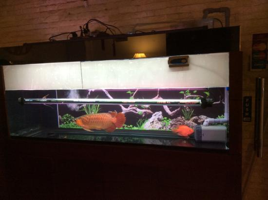 Breakfast corner picture of nguyen khang hotel ho chi for Fish hotel tank