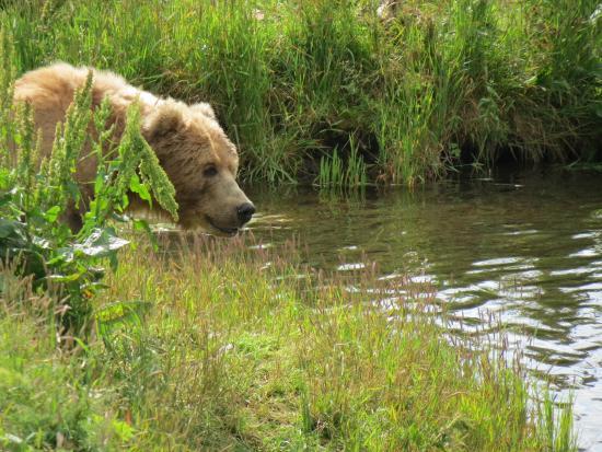 Kodiak National Wildlife Refuge
