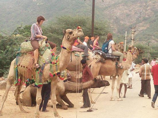 North India Day Tours - Private Tours
