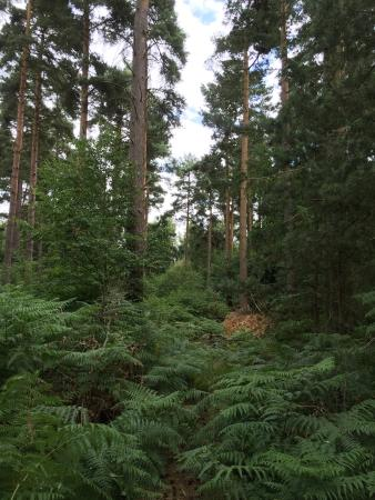 Thetford Forest Park: Nature