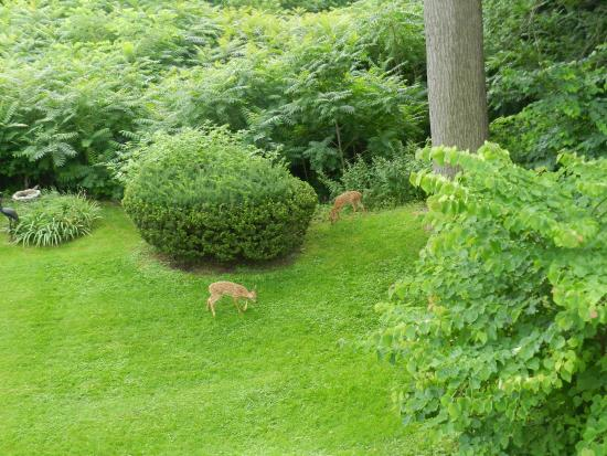 1907 Bragdon House Bed & Breakfast : Early morning visitors