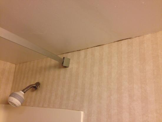 Red Roof Inn Gurnee - Waukegan: Mold and filth