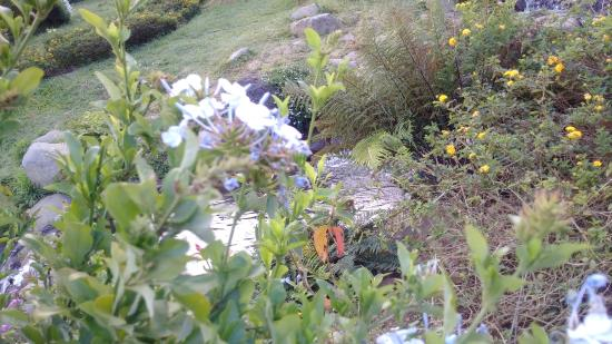 Poda arbustos florecientes (de Rutgers NJAES)