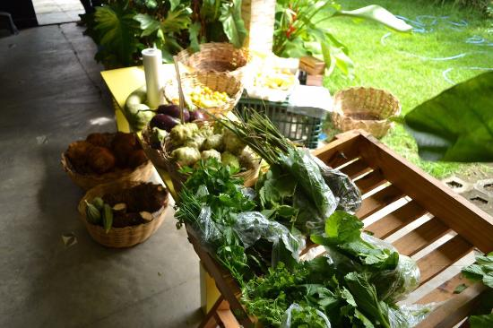 Cozinha Ecologica