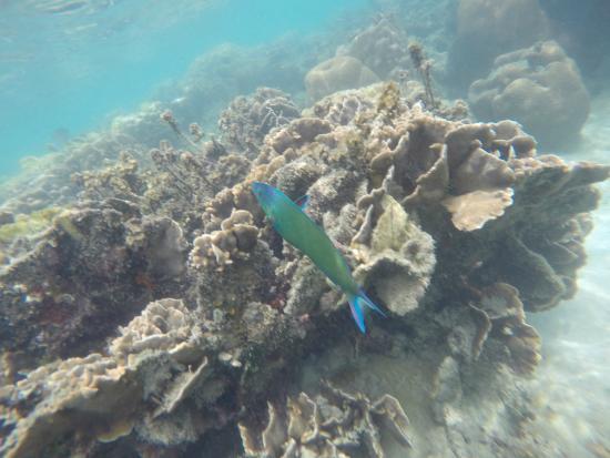 snorkeltrip - Picture of Koh Tan, Ko Samui - TripAdvisor