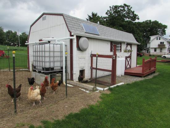Quill Haven Country Inn: chicken coop