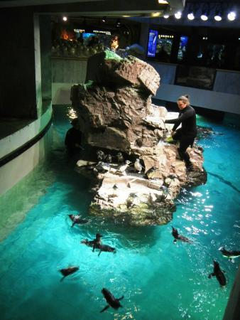 Penguin Area Picture Of New England Aquarium Boston Tripadvisor