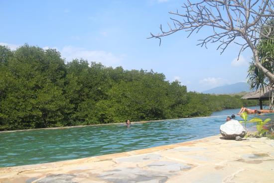 meilleure sélection 2f5ea dfe2b beach pool - Picture of Mimpi Resort Menjangan, Banyuwedang ...