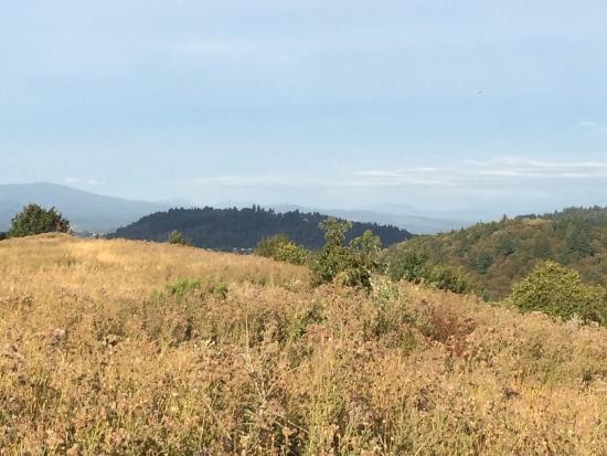 Powell Butte Nature Park: photo0.jpg