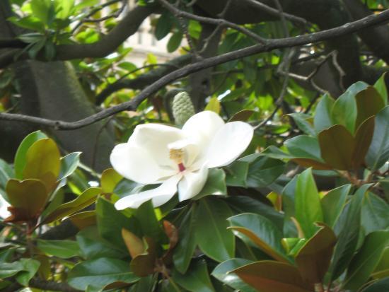 Parco Botanico Villa Rocca: Растения в парке