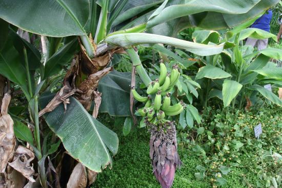 plante carnivore jussieu