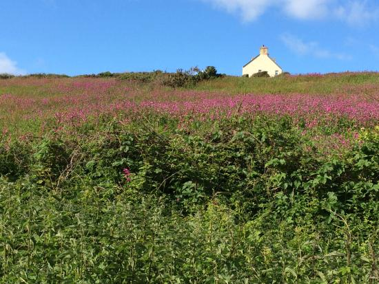Lower Tresmorn Farm: From our walk to Coastal Path.