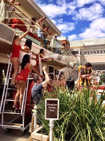 Encore At Wynn Las Vegas Beach Club Bungalow