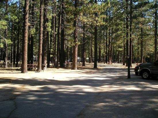 Tahoe Valley Campground: Grounds