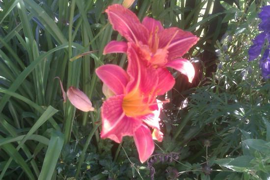 The Village, Church Farm: Cottage Garden Lilies