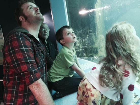 Macduff Marine Aquarium: photo0.jpg