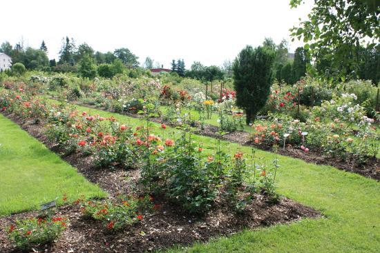 Poltsamaa, Estônia: Rose garden