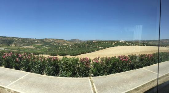 Boutari Winery: View from tasting room