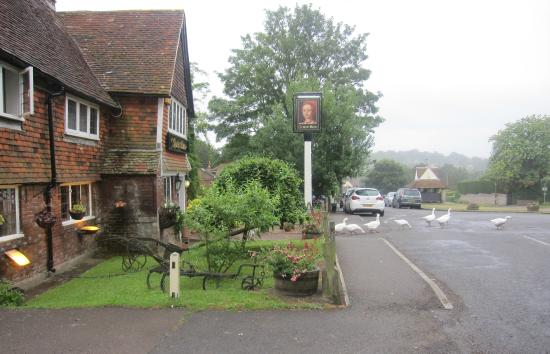 The Queen's Head : Pub with Geese