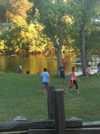 Coloma Resort: Kids playing with the geese on the lawn