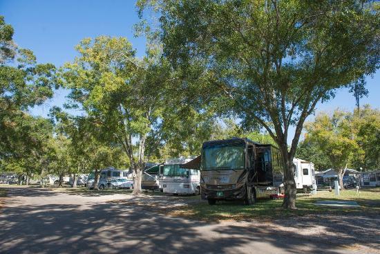 Vacation Village Rv Resort Largo Fl Foto S Reviews