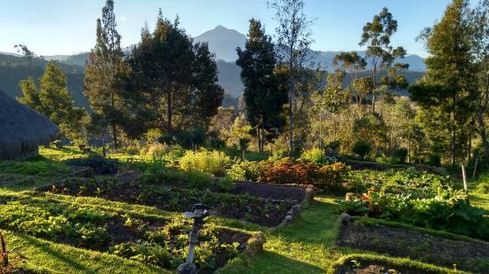 Casa Mojanda: Our organic garden and Cotacachi Volcano