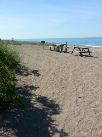 Willow Beach Ontario >> Black Willow Beach Picture Of Point Pelee National Park