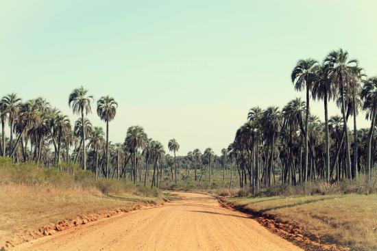 El Palmar National Park, Argentinien: Camino principal.