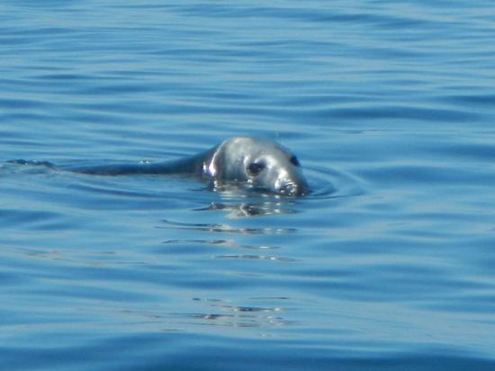 Seal picture of acadia fishing tours southwest harbor for Deep sea fishing maine