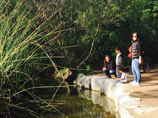 El Dorado Nature Center: Giant lake with lots to see.