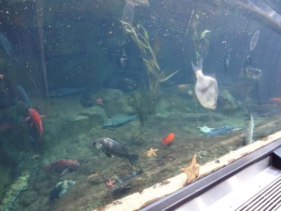 Aquarium Of The Bay Picture Of Aquarium Of The Bay San