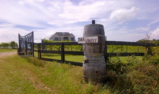 Athens (TX) United States  City new picture : ... Vineyards Picture of Tara Vineyard & Winery, Athens TripAdvisor