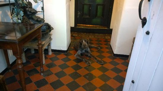 Stanley Arms: George the dog in the entrance porch
