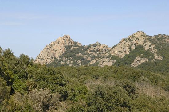 Parco Ente Foreste di Assai: Foreste di Assai/foto M.Piacentino