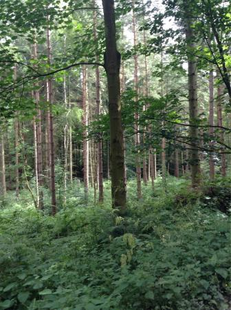 Chopwell Woods