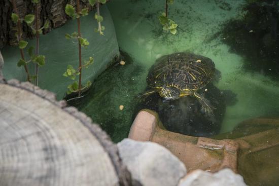 L'albero delle Fate: le mie tartarughe