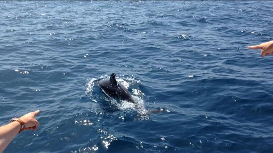 русский перевод знакомств dolphin