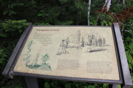 Ash River Visitor Center: Forest Overlook